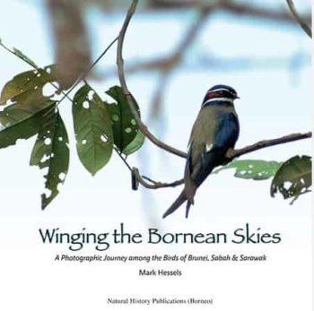 Winging the Bornean Skies