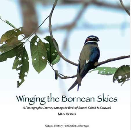 Winging the Bornean Skies