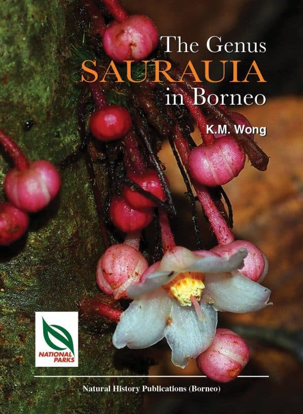 Genus Sarauria of Borneo