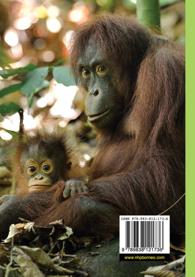 Orang Utan Book Back Cover